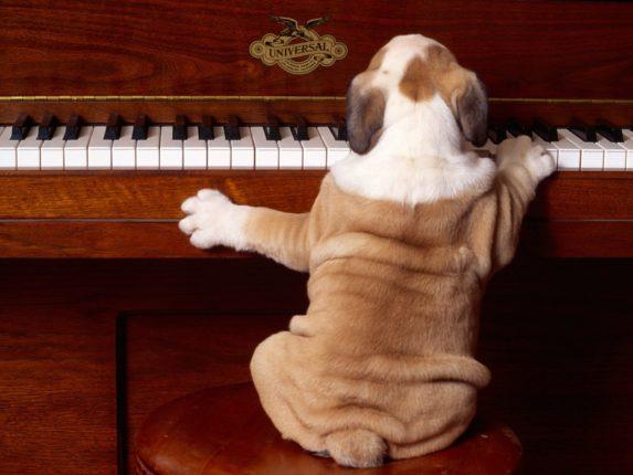 animaux musique